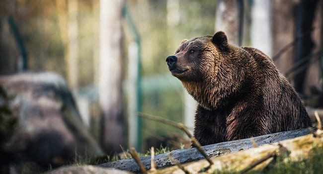 Don't feed the bears! How parks get visitors to protect nature